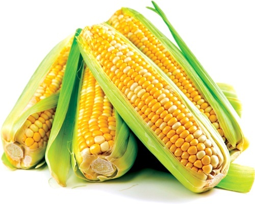 У AgroBrokBot уклали першу угоду по ф'ючерсу на кукурудзу фото, ілюстрація