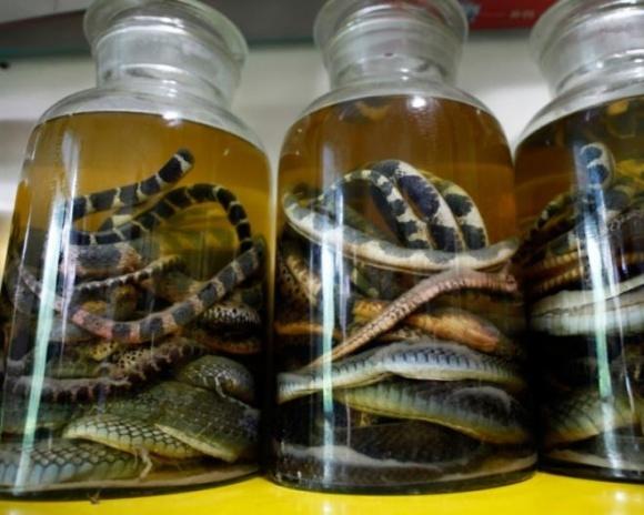 Жители китайской деревни стали миллионерами благодаря бизнесу на змеях фото, иллюстрация