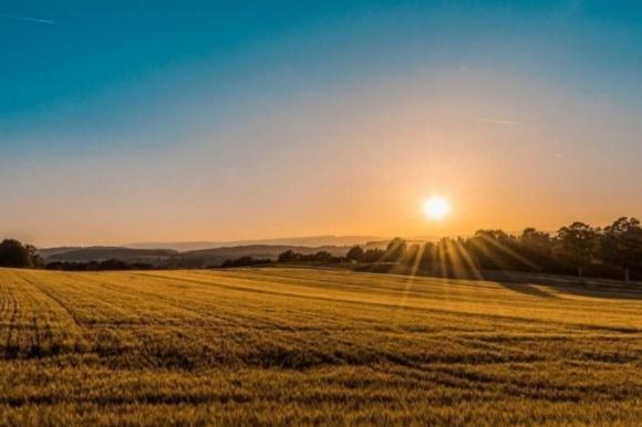 Землевласники про ринок землі: 92% селян — за фото, ілюстрація