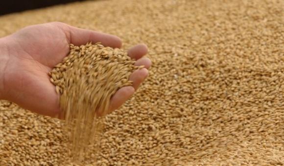 В следующем МГ ожидается повышение закупочных цен на пшеницу и ячмень фото, иллюстрация