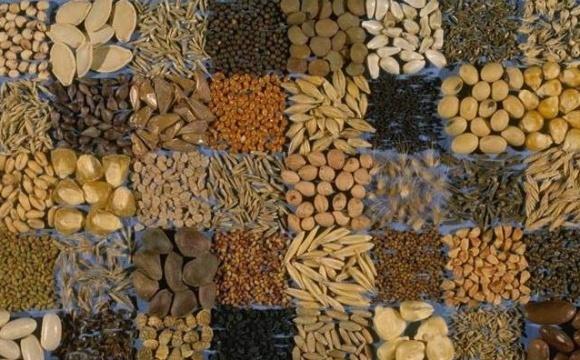 Хлібороби Рівненщини поставили рекорди по зерновим і зернобобовим фото, ілюстрація