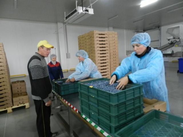 """Завод із доробки лохини у ТОВ """"Бетек"""""""