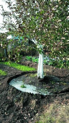 Влагозарядный  полив сада
