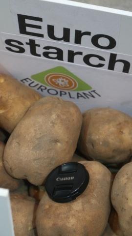 Картопля спеціального крохмального сорту