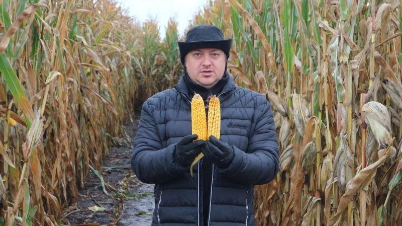 Кукурудза, висіяна на глибину 8,3 см (праворуч), сформувала менший качан, ніж висіяна на глибину 7,6 см (ліворуч)