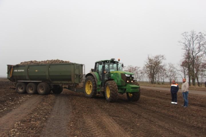 Перевезення цукрового буряка з поля в кагати