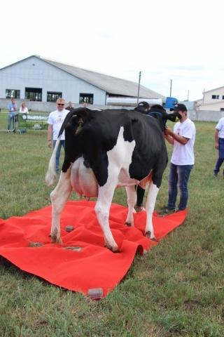 Найкраща корова удостоїлась червоного килима