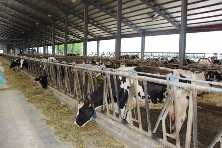 Роботизована ферма всередині