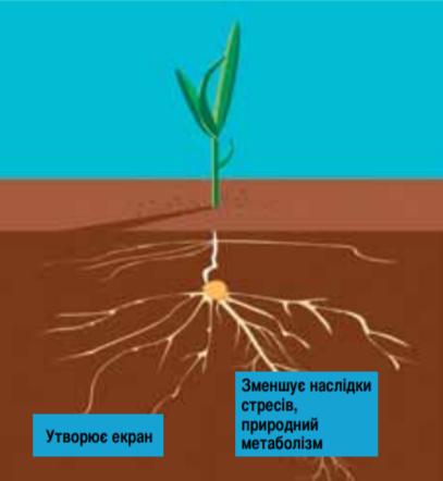 Переваги преміальної технології обробки насіння LumiGEN™