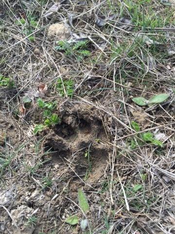 На Херсонщині вистачає дичини. Фото з профілю Йохана Бодена на Facebook