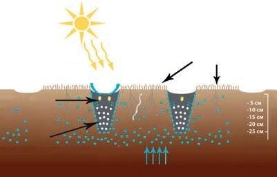 Загальний принцип технології смугового обробітку ґрунту