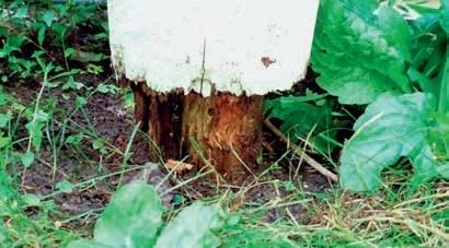Псування дерев'яного стовпчика над поверхнею ґрунту