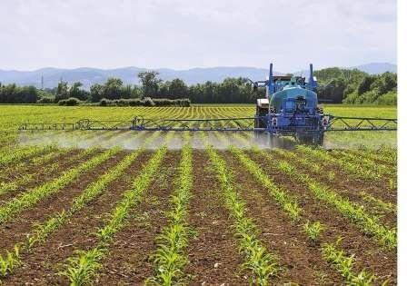 Гербициды от сорняков на кукурузу, гербициды для уничтожения сорняков на кукурузе — Пропозиция