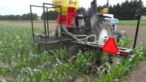 підсівання покривних культур у посіви кукурудзи