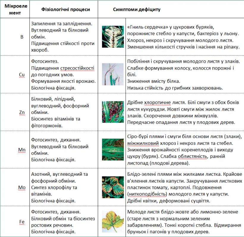Таблиця 1. Ключова роль мікроелементів у фізіологічних процесах рослин