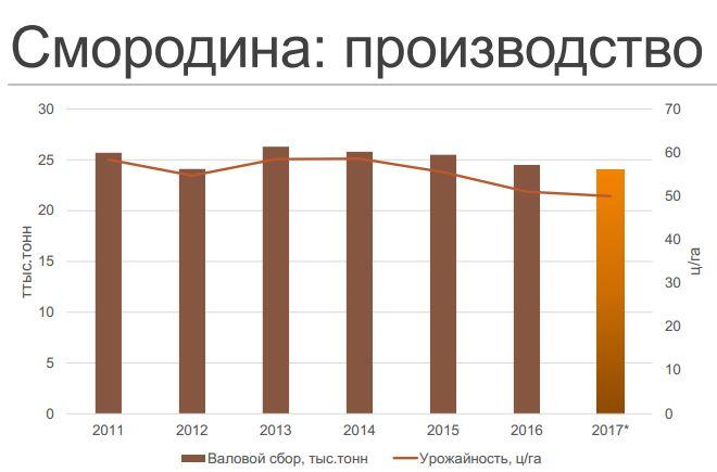 Смородина. Производство в Украине.