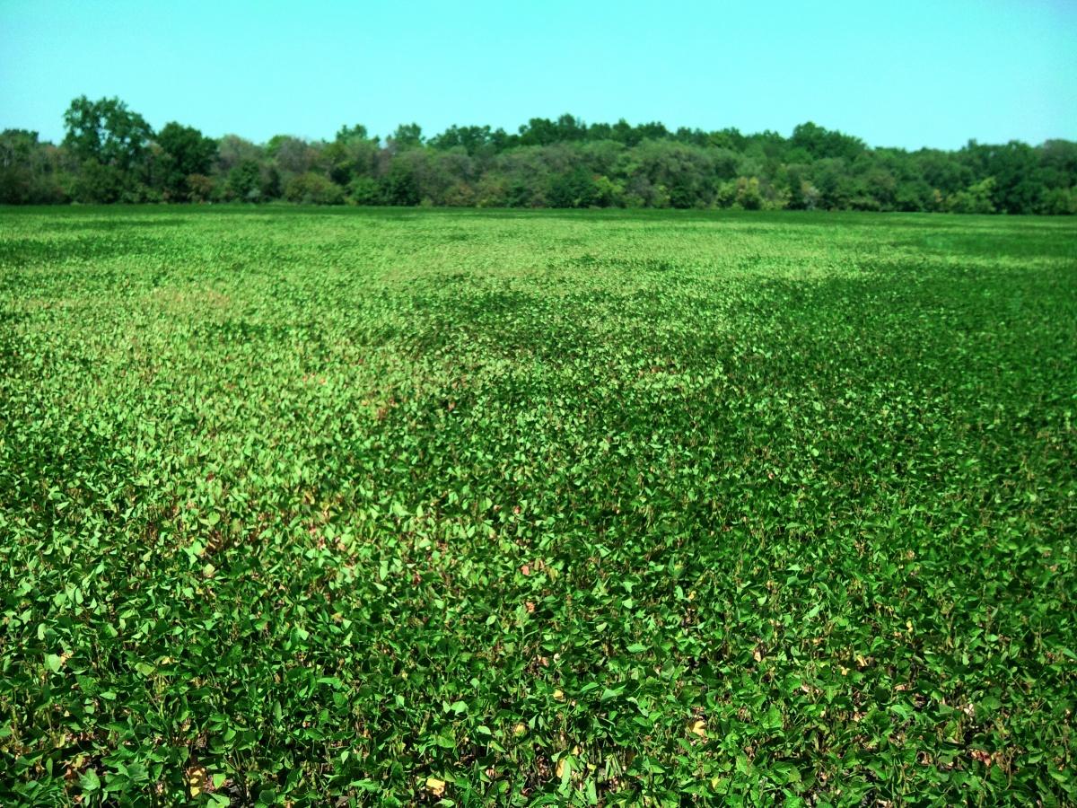 Істотний вплив на заселеність посівів сої членистоногими та їхню шкідливість має густота стояння рослин і ширина міжрядь