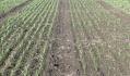 Протруєння насіння - за та проти