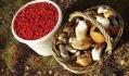 Заготовка грибов - сезонный бизнес, поэтому большинство компаний занимается еще и заготовкой черники, клюквы, ежевики, а также фасоли, семечек тыквы, грецкого ореха