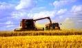 Самая высокая урожайность ранних зерновых и зернобобовых культур - во Львовской области