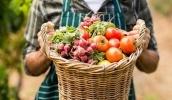 В Хмельницкой области планируется создание агрокластера