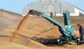 Російські аграрії будуть змушені продавати зерно за невигідними для себе цінами з метою вивільнити площі для нового врожаю