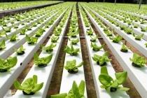 Аграрна технологічна революція врятує людство від голоду