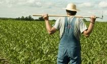 Мелкие и малые фермеры взяли всего 5 млн, то есть, использовали лишь 3% от общей суммы бюджетной программы возмещения уплаты процентов по банковским кредитам