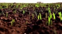 Аграріям рекомендується проводити передпосівну обробку насіння, вживати заходів по знищенню гризунів