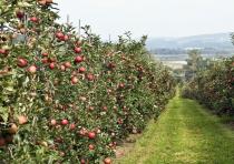 В этом году садоводы получат большую государственную поддержку. Кроме предоставленных ранее 75 млн грн, правительство решило дать еще 224,3 млн