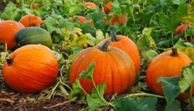 """Минулого сезону у """"Степовому"""" зібрали 750-800 кг/га і це був вдалий рік. В цьому році в господарстві очікують урожай вдвічі менший"""