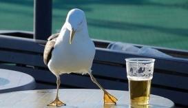 У Штатах крафтові пивоварні захопили вже чверть всього пивного ринку, у нас крафтове пиво відвоювало поки близько 1% ринку