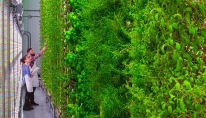 Американський стартап Plenty має намір відкрити вертикальні ферми з площею грядок понад 9 тис. м2 в кожному великому місті світу