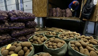В Україні стрімко підвищується ціна картоплю та моркву. Якщо вартість кілограма моркви лише досягла рекордних показників минулого року, то у випадку з картоплею можна констатувати встановлення п'ятирічного цінового рекорду