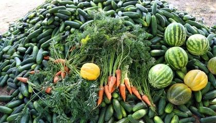 В ФГ «Видродження» выращивают овощи и ягоды по принципу «всего понемногу», прежде всего - чтобы диверсифицировать риски и задействовать людей, пока не начался сезон в саду
