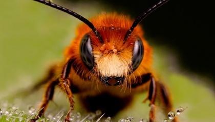 Дослідники виявили, що вплив оброблених культур зменшувало успішність перезимували колоній бджіл в двох з трьох країн