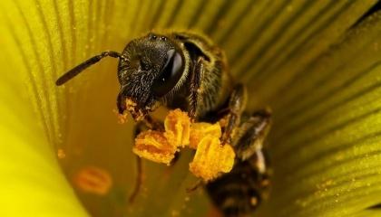 Якщо бджолині колонії будуть піддаватися інтенсивному сільському господарству, вони понесуть однакові втрати, з неонікотиноїдами чи ні