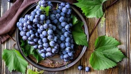Для України світовий ринок винограду представляє значний інтерес. Наприклад, країни ЄС лише на 75% покривають внутрішні потреби його споживання за рахунок власного виробництв