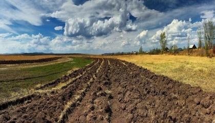 Переведение 1 млн га земель сельхозназначения из госсобственности в коммунальную может принести казне дополнительно до 600 млн грн в год