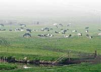 Чому виробництво молока й м'яса в Україні — проблемне? фото, ілюстрація