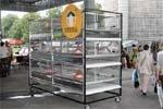 Клітки для пернатих  від вітчизняних виробників фото, ілюстрація