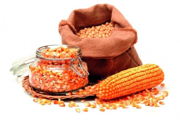 Ринок насіння в Україні: як розпізнати контрафактні насіння? фото, ілюстрація