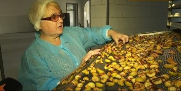 Как на Прикарпатье организовали производство сушеных овощей  фото, иллюстрация