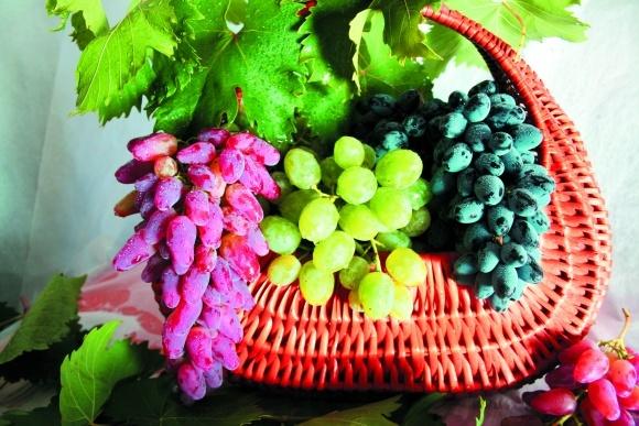 Перспективні столові сорти та форми винограду фото, ілюстрація