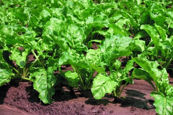 Биологическая защита растений от болезней фото, иллюстрация