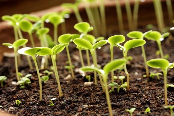 Багатокомпонентні комплексні добрива від «УКРАГРОЦЕНТР» підвищать врожайність фото, ілюстрація