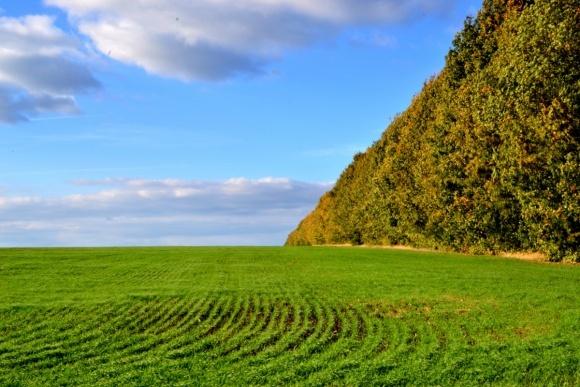 Весняний догляд за посівами озимої пшениці фото, ілюстрація