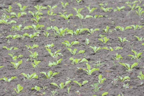 Прогноз агрометеорологічних умов весняного періоду вегетації цукрових буряків у 2003 році фото, ілюстрація