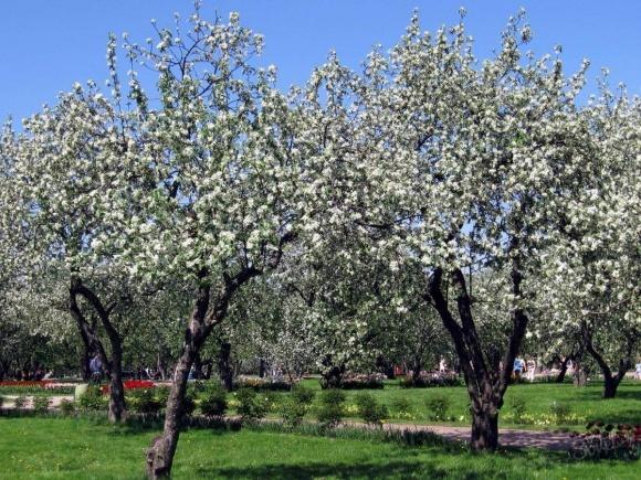 Защита сада после цветения фото, иллюстрация
