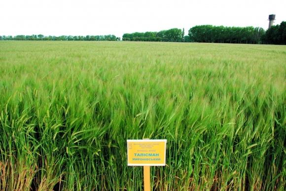 Ресурсосберегающая технология выращивания ярового ячменя 14